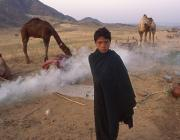 View the image: Dawn, Pushkar, Camel Fair, 1994